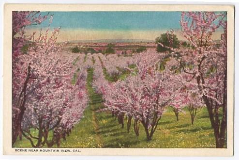 orchardsmv